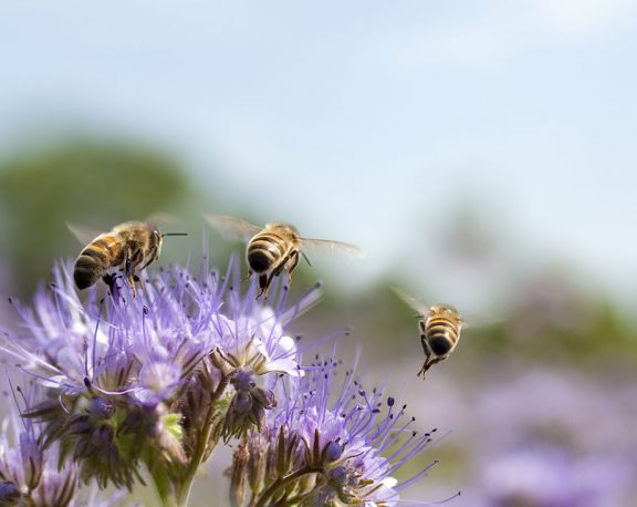 What's the Buzz with Bees display image