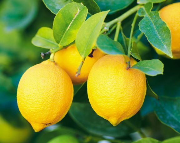 What are 5 Uses for Lemons display image